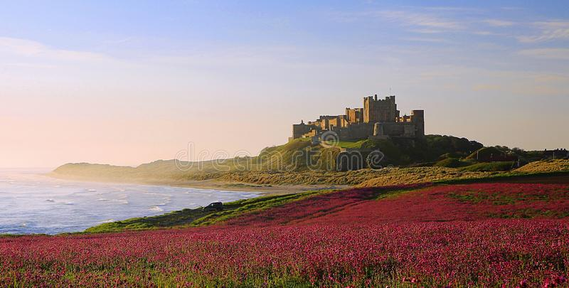 Castelo de Bamburgh, Northumberland & as candelárias cor-de-rosa fotos de stock