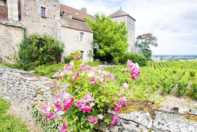 Castelo de Gevrey-Chambertin, Cote de Nuits, Borgonha, França imagem de stock royalty free