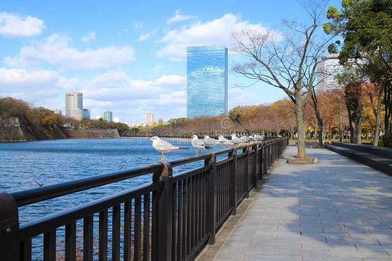 Castelo de Japão Osaka dos pombos imagem de stock
