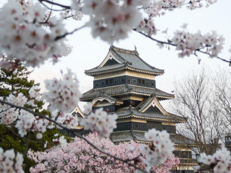 Castelo de Matsumoto durante a flor de cereja (Sakura) imagem de stock