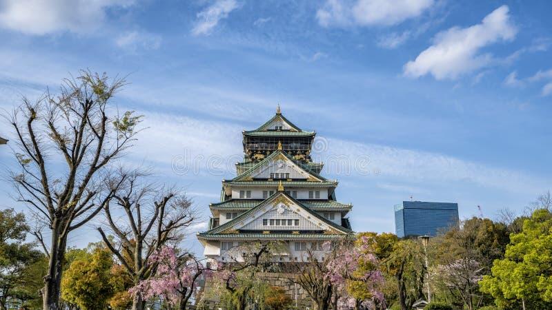 Castelo de Osaka em Japão com a árvore da flor de cerejeira na parte dianteira imagem de stock royalty free