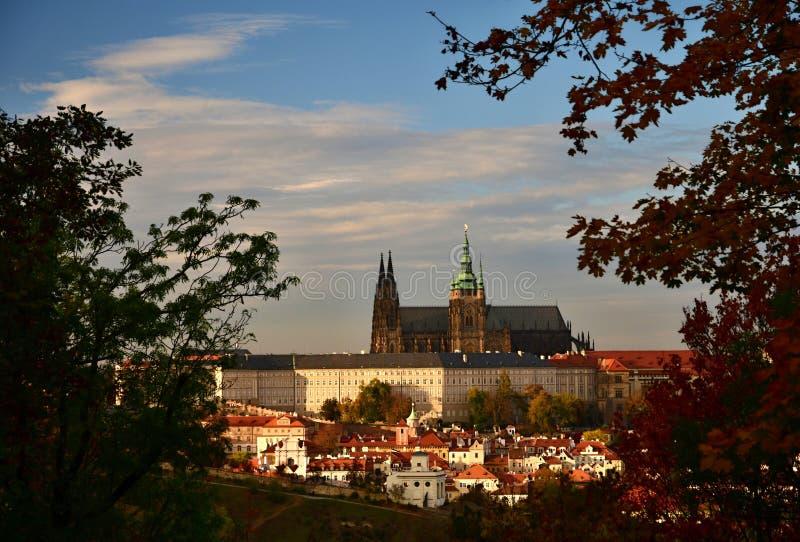 Castelo de Praga dentro das árvores da distância na luz do por do sol, Praga, república checa fotografia de stock royalty free
