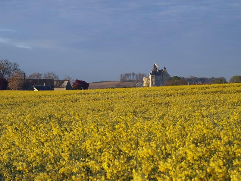 Castelo de um campo do rapeseed, Usseau de Motte fotografia de stock