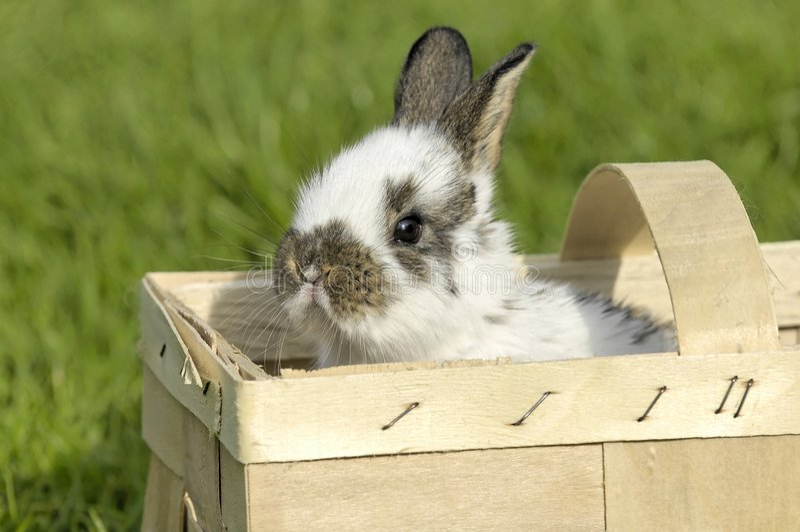 Castelo doce de Bunnys easter imagem de stock royalty free