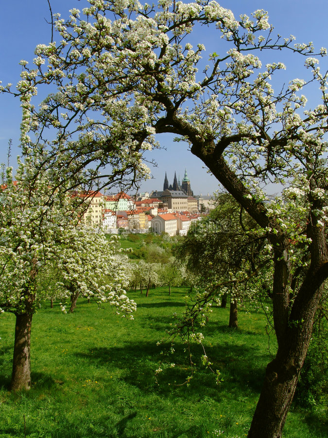 Castelo gótico de Praga com árvores de florescência fotografia de stock royalty free