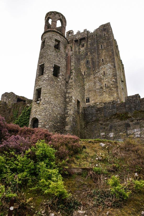 Castelo irlandês Blarney, famoso para a pedra da eloquência. Ire fotos de stock