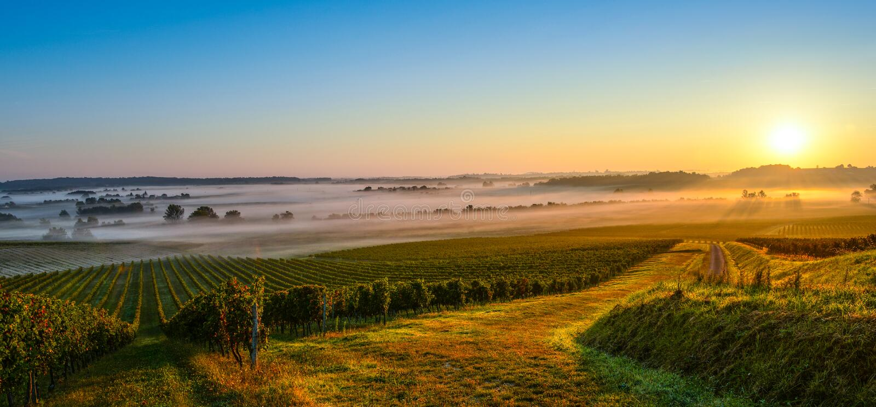 Castelo no nascer do sol do vinhedo do Bordéus fotos de stock royalty free