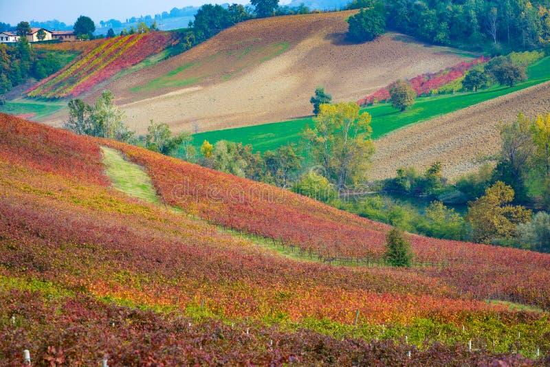 Castelvetro di Modena, vingårdar i höst arkivfoto