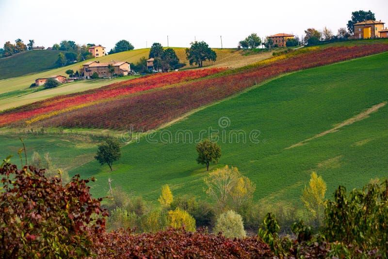 Castelvetro-Di Modena, Weinberge im Herbst stockfoto