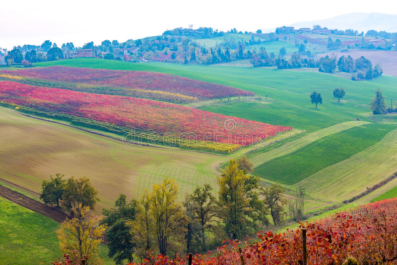 Castelvetro-Di Modena, Weinberge im Herbst lizenzfreie stockbilder