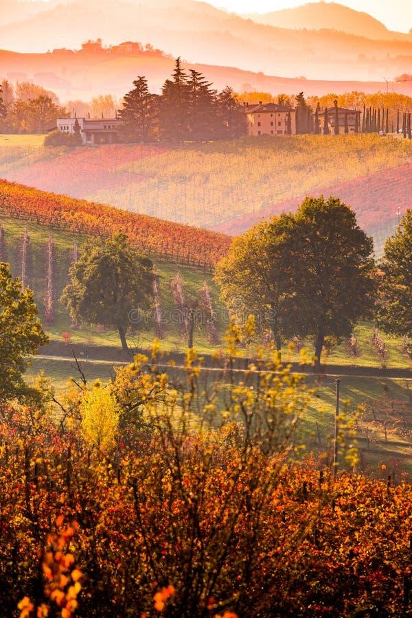 Castelvetro-Di Modena, Weinberge im Herbst stockbilder