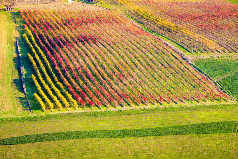 Castelvetro-Di Modena, Weinberge im Herbst lizenzfreie stockfotografie