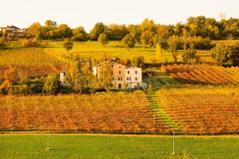 Castelvetro-Di Modena, Weinberge im Herbst lizenzfreies stockbild
