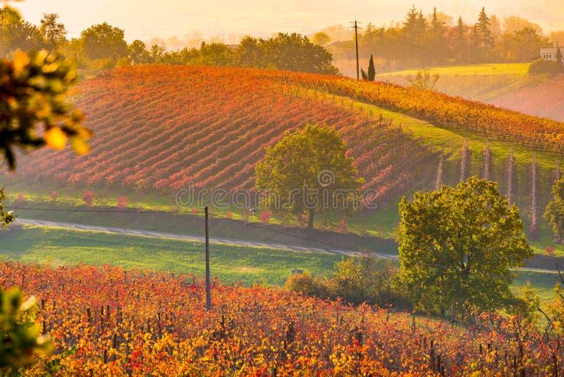 Castelvetro-Di Modena, Weinberge im Herbst stockfotografie