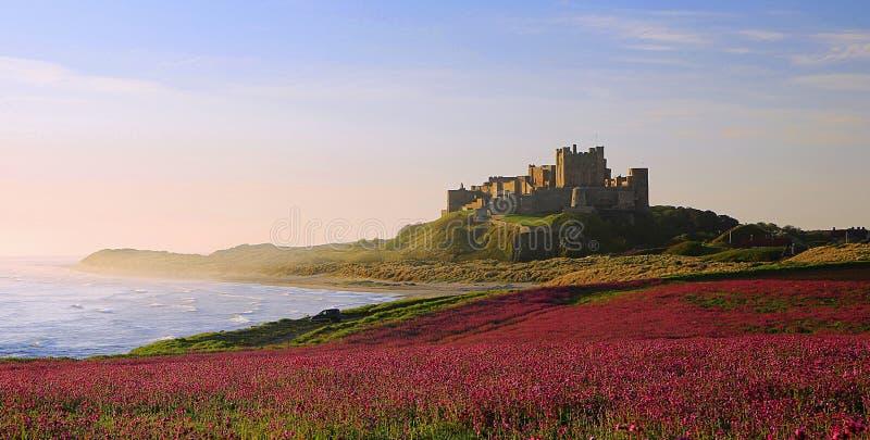 Castillo de Bamburgh, Northumberland y las coronarias rosadas fotos de archivo
