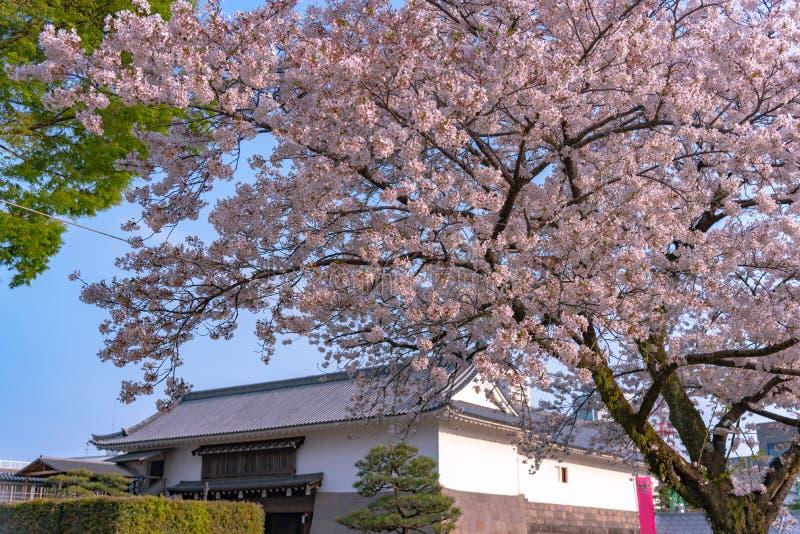 Castillo Tatsumi-Yagura de Sunpu durante las flores de cerezo imagen de archivo libre de regalías