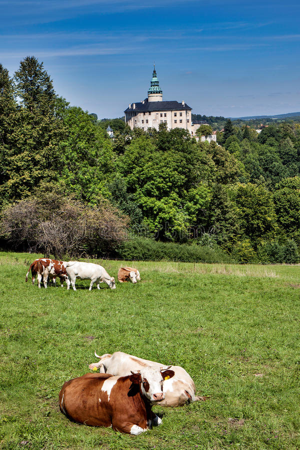 Castle Frydlant. Czech Republic - castle Frydlant with cows stock photography