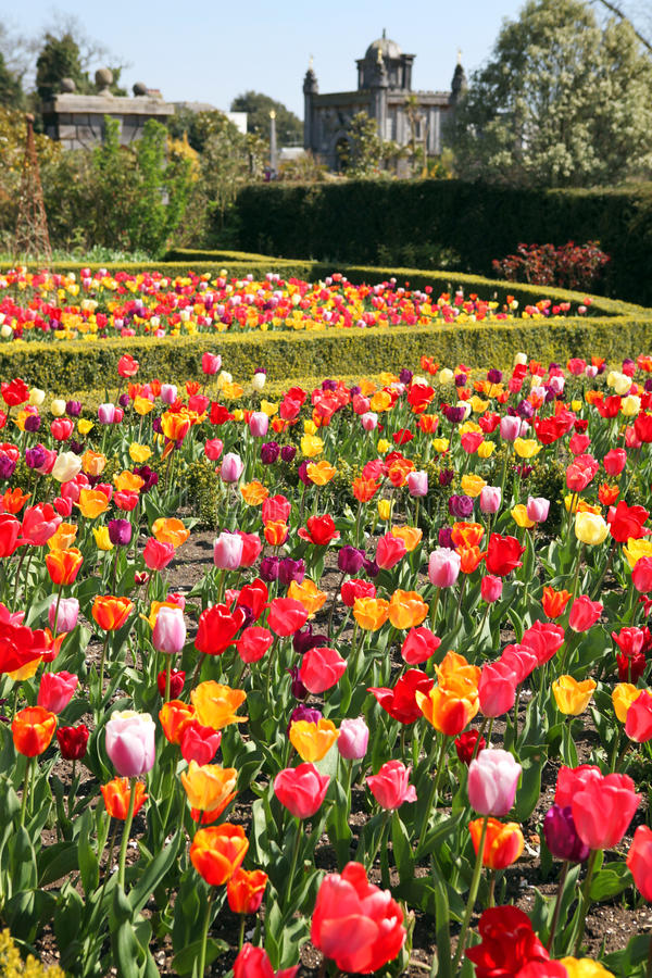 Download Castle Garden Arundel Tulips Stock Photo - Image: 14061908