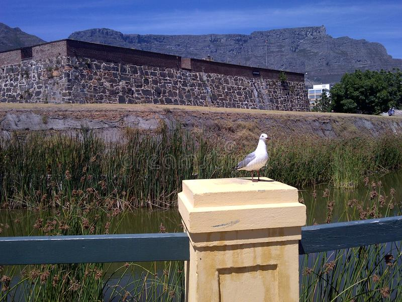 Castle of Good Hope and Table Mountain. The Castle of Good Hope is a bastion fort with five corners. Here is one of the corners called & x27;Leerdam& x27; with royalty free stock photography