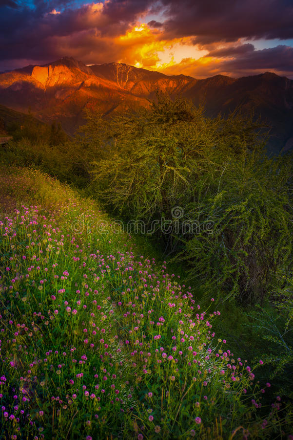 Castle Rock Clover Flowers Sequoia National Park Sunset Vertical royalty free stock photos