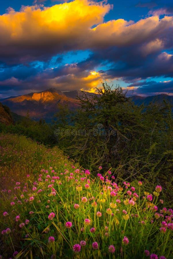 Castle Rock Clover Flowers Sequoia National Park Sunset Vertical stock image