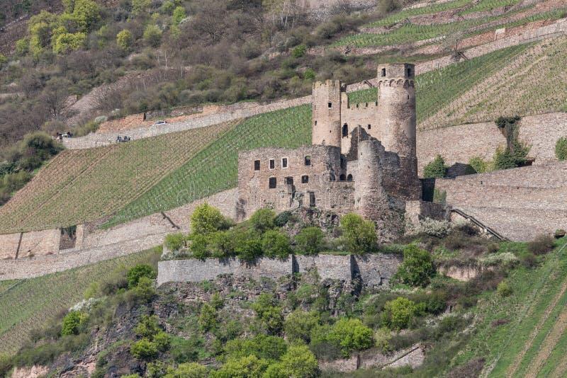 Castle ruin ehrenfels bingen germany. The castle ruin ehrenfels bingen germany stock photography