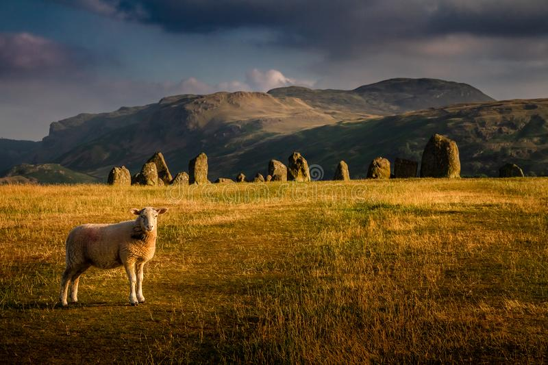 Castlerigg与一只绵羊的石头圈子壮观的看法在一个喜怒无常的夏日在湖区Cumbria, 库存照片