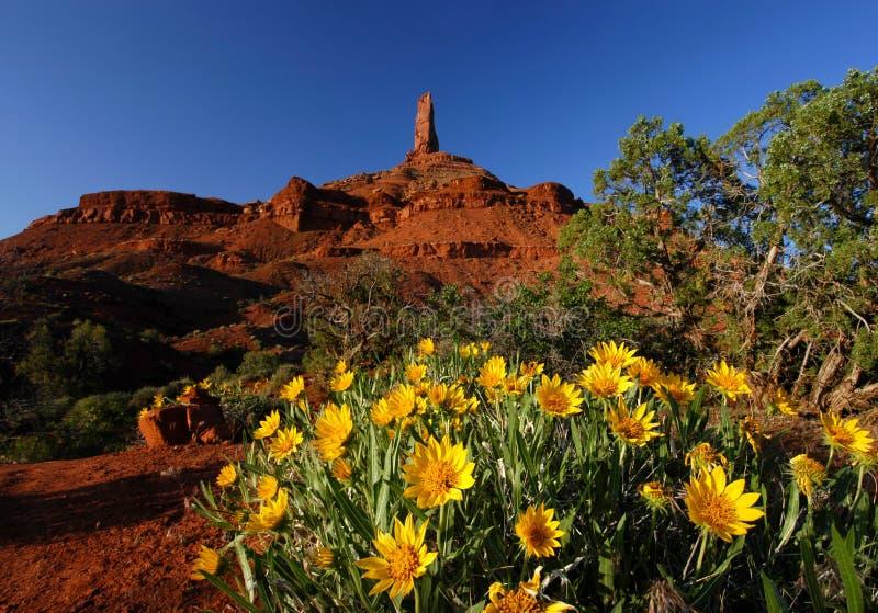 Castleton Tower. Spring picture of Castleton Tower, near Moab, Utah royalty free stock image