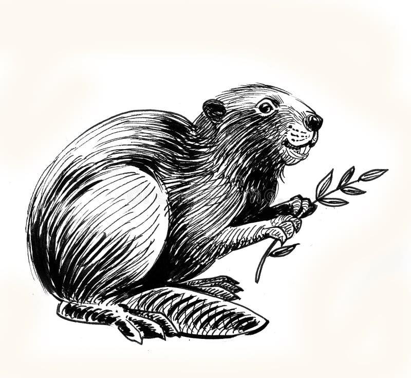 Castor com ramo ilustração royalty free