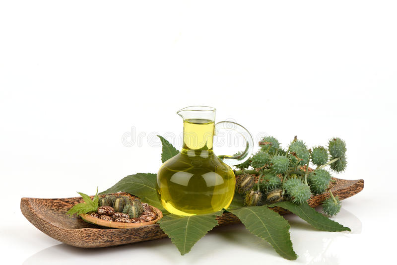 Castor oil bottle with castor fruits, seeds and leaf. Castor oil bottle with castor fruits, seeds and leaf; The medicinal properties stock photo