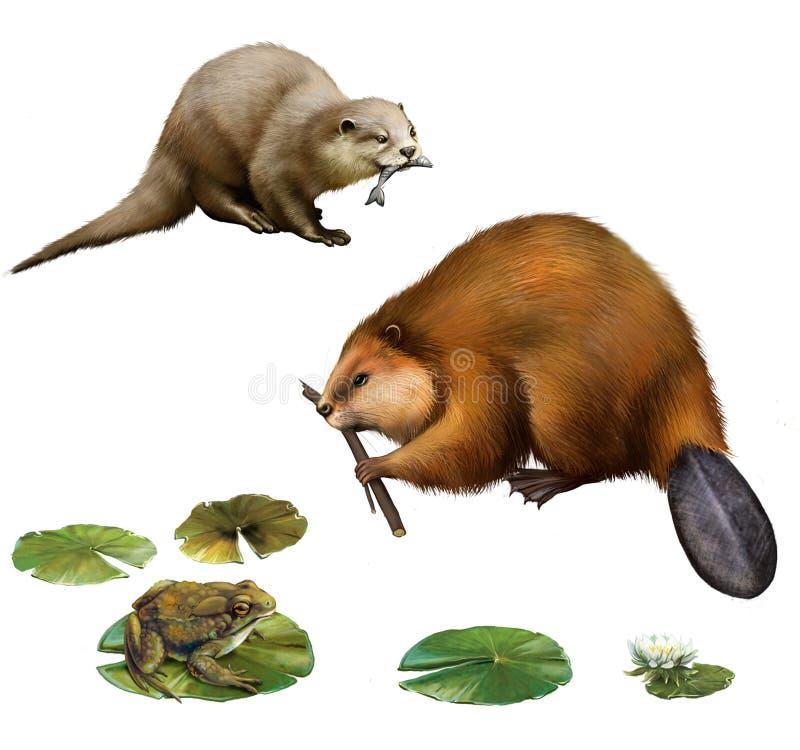 Castor, nutria bonita con un pescado, rana ilustración del vector