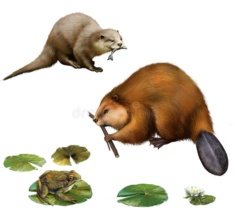 Castoro, lontra graziosa con un pesce, rana illustrazione vettoriale