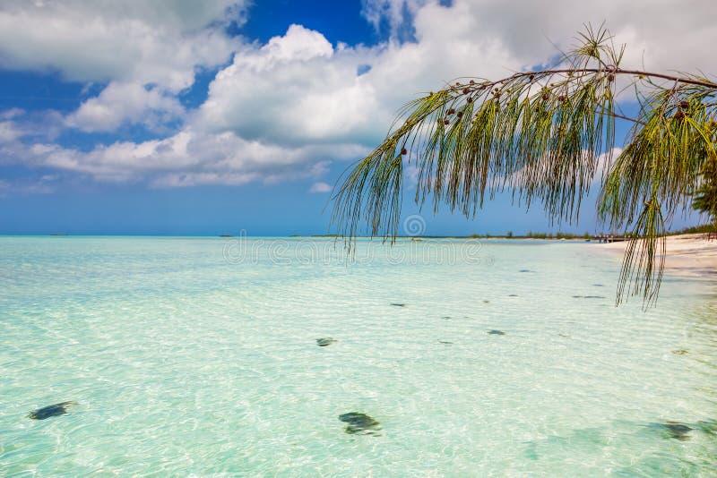 Casuarina branch over water at Bambarra Beach royalty free stock images