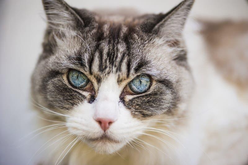 Cat& x27; взгляд s стоковое фото