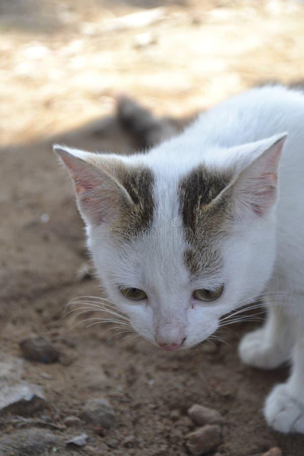 CAT МУЖЧИНЫ МЛАДЕНЦА стоковые изображения