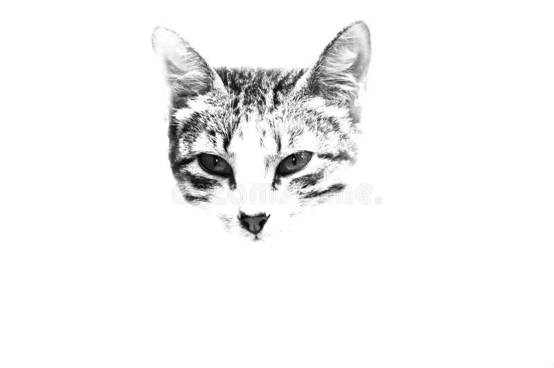 Cat& x27; подвергли действию намордник s, который стоковая фотография rf