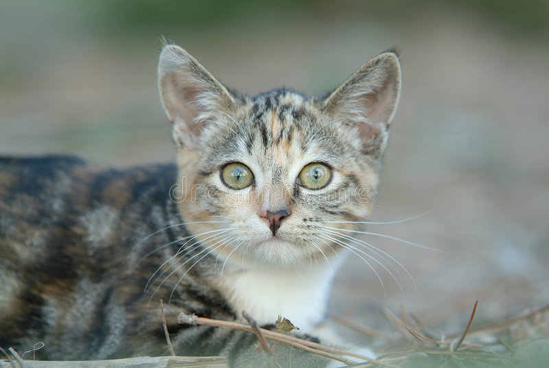 Cat 1 stock images