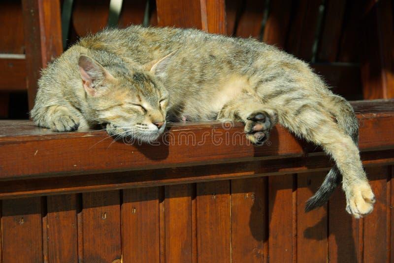 Download Cat stock image. Image of tire, slink, skin, grey, head - 10248713