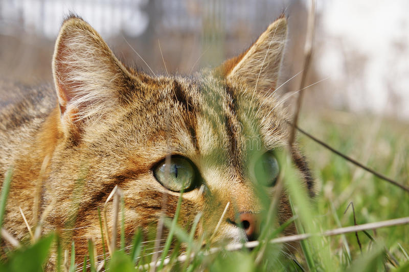 Download Cat stock photo. Image of green, head, pets, pensive - 10522780