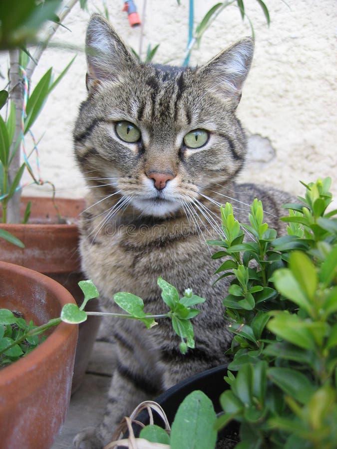 Cat. Sitting in the garden