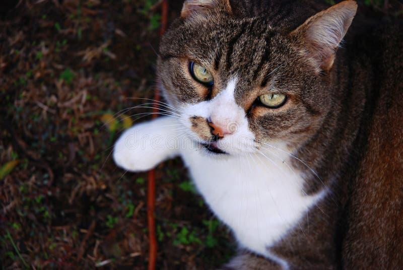 CAT fotografia stock