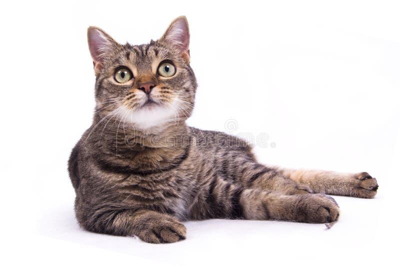 The cat stock photos