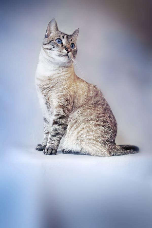 Download Cat Stock Photos - Image: 1222193