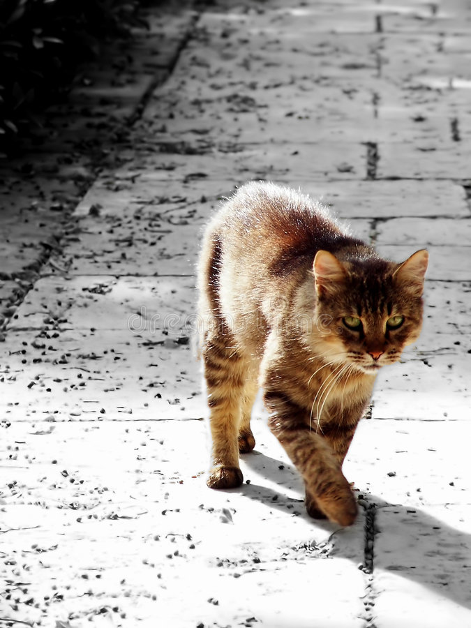 Download Cat stock image. Image of furry, target, stroll, whisker - 1236805