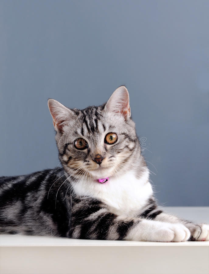 Download Cat Stock Photography - Image: 12598222