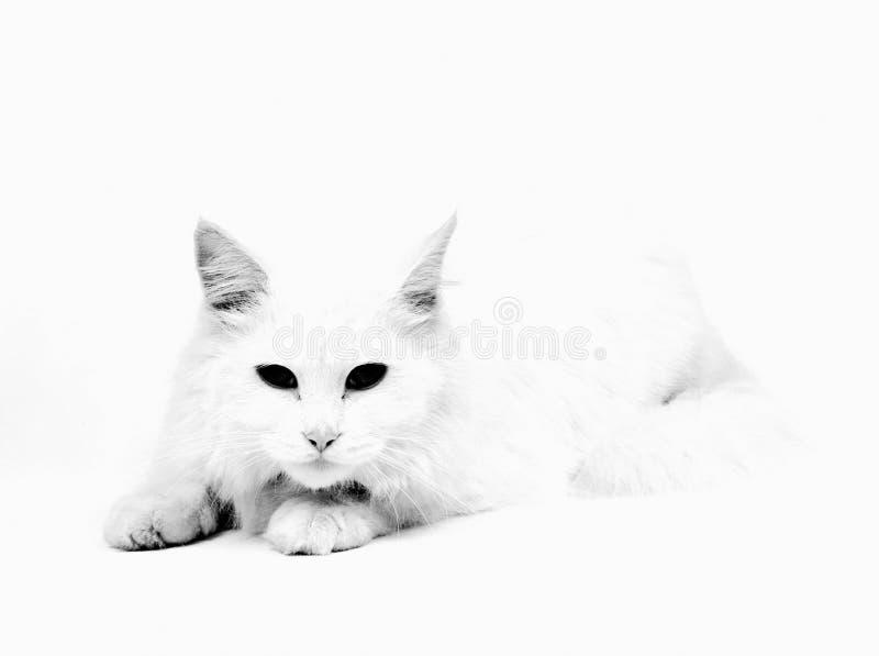 Download Cat stock image. Image of grabbing, profile, stretching - 12694127