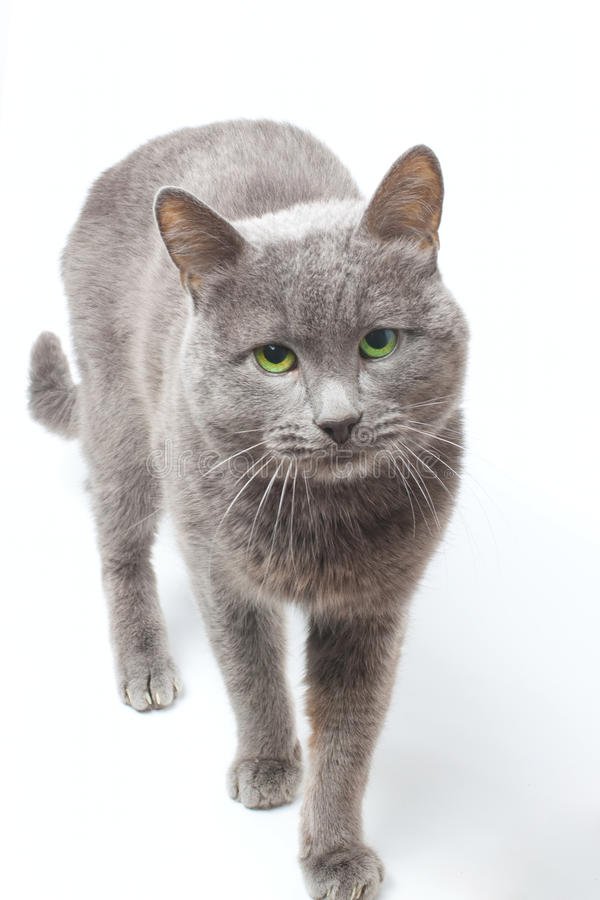 The Cat stock image