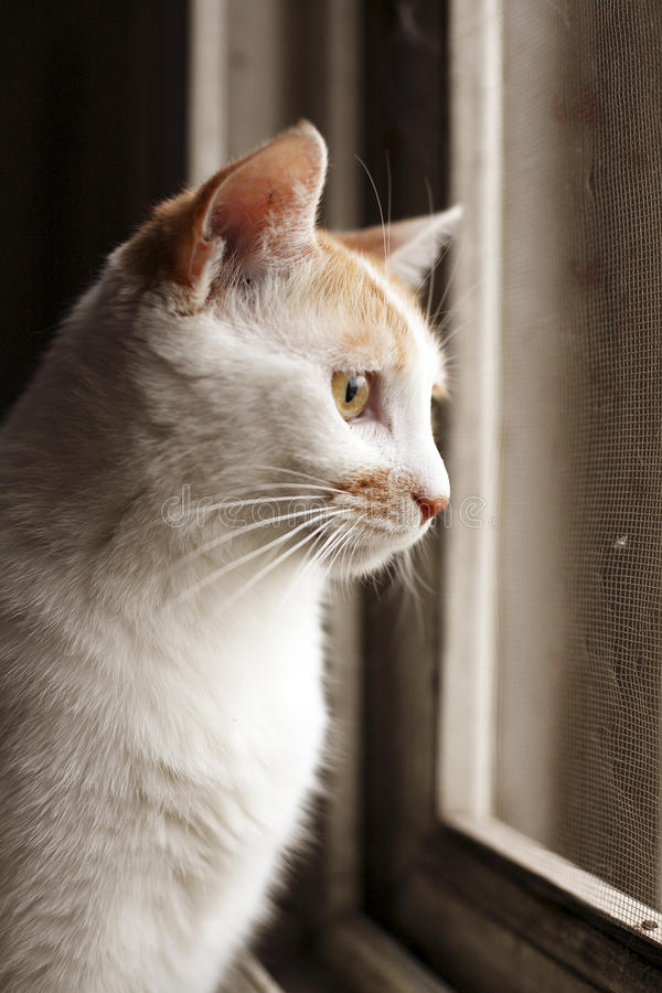 Download Cat Stock Image - Image: 14291821