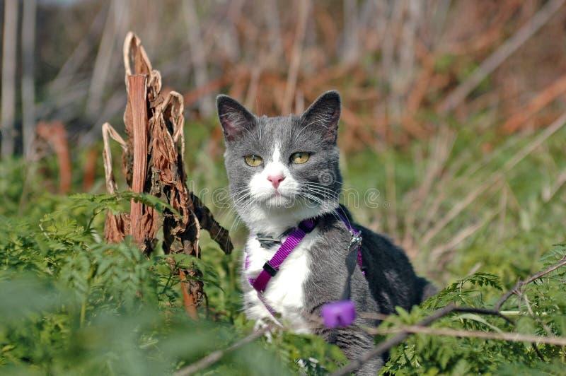 Download Cat stock image. Image of purple, kitty, ferns, animal - 1432177