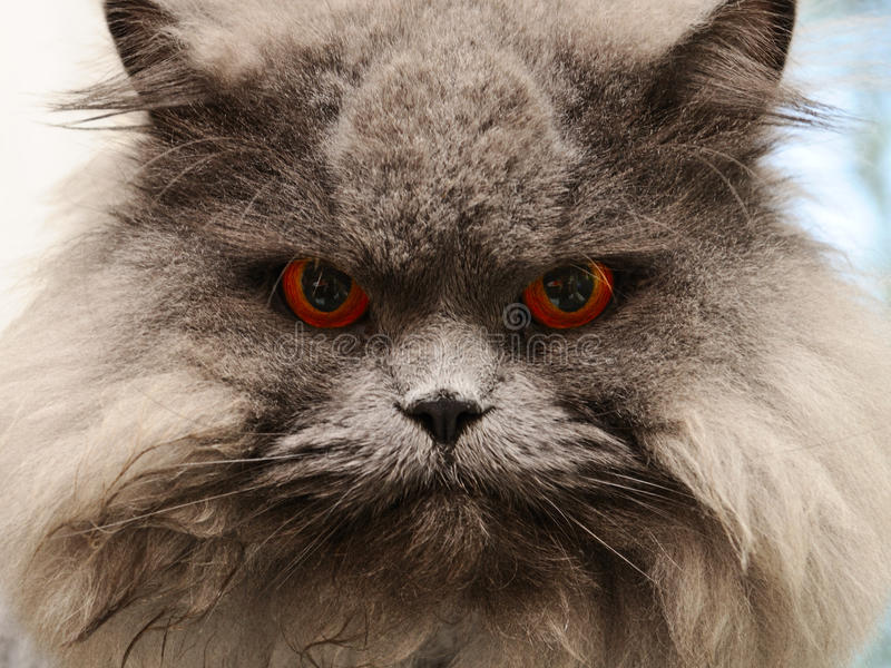 Download Cat stock photo. Image of looking, expression, portrait - 15587744